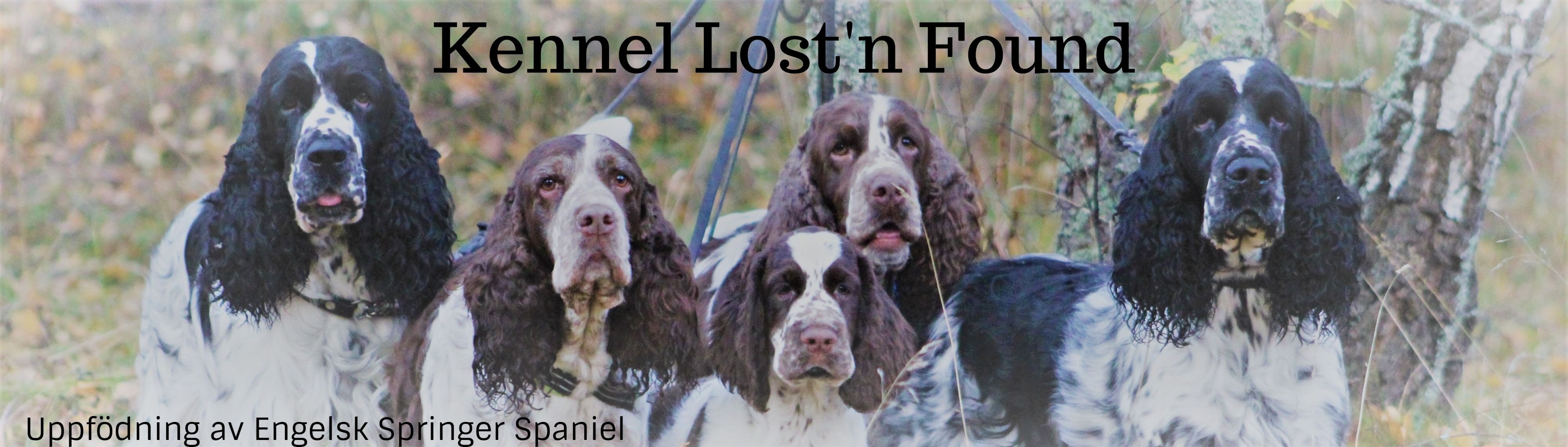Kennel Lost'n Found